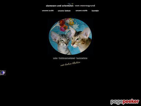 Meeresgrund Katzenzucht für Siamesen und Orientalen