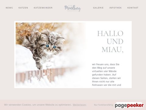 Britisch Kurzhaar Colourpoint Katzen aus der Mondburg (DE)